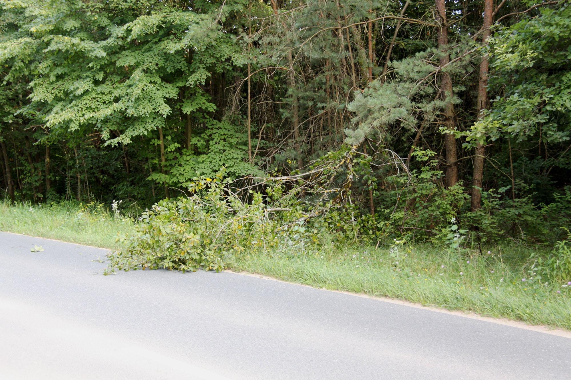 2016_08_19_EB054-Baum-ueber-Fahrbahn_02-2000p