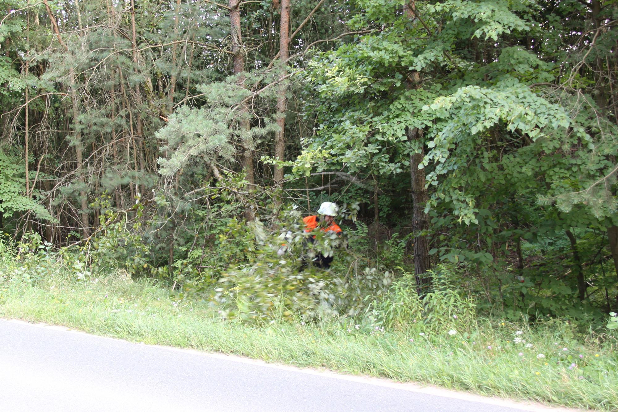 2016_08_19_EB054-Baum-ueber-Fahrbahn_07a-2000p